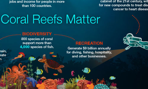 image of a coral reef infographic